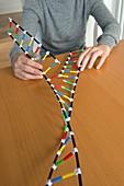 Teenager demonstrating DNA replication