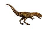 Majungasaurus dinosaur,illustration