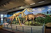 Reconstruction of Allosaurus