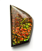 Ammolite gemstone