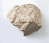 Rough meerschaum,a white mineral