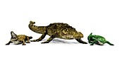 Sarcosuchus and crocodiles,illustration