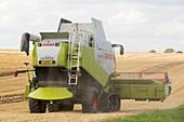 A farmer harvesting wheat