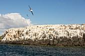 Inner Farne,on the Farnes Islands,