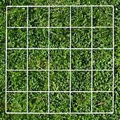 Quadrat on a lawn