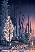 Pre-Cambrian life forms,illustration