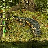 Dendrerpeton prehistoric amphibian