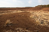 Raised bog being harvested for peat