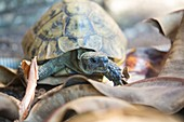 Wild tortoises in a garden in Sivota