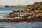 Seahouses on the Northumberland coast