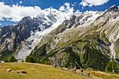 The rapidly receding Brenva Glacier