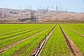 Crops being irrigated,Tehachapi Pass