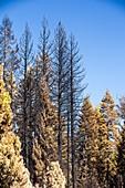 The King Fire,California,USA
