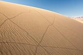 Lizard trails on Mesquite flat sand dunes