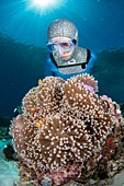 Free diver with anemonefish