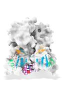 Daclatasvir and NS5A protein complex