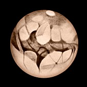 Mars,early 20th century illustration
