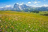 Flowery Alpine meadow,Italy