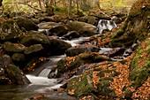 Pyrenean stream,France