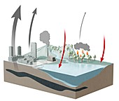 Carbon dioxide emission and absorption