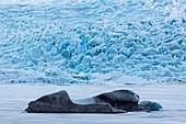 Icebergs in glacial lake