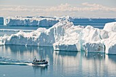 A fishing boat sails through Icebergs