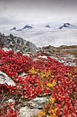 Harding ice field,Alaska