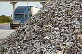Oyster shells after processing