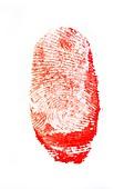 Bloody fingerprint