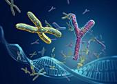 Sex chromosomes,illustration