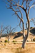 Lake Eildon in drought,Australia