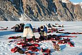 Inuit hunters butchering a walrus