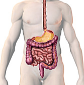 Acid Indigestion,illustration