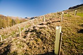 Native tree planting in Troutbeck