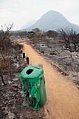 Fire-damaged bin and shrubs