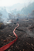 Fire hose in smouldering scrubland