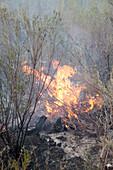 Wildfire in scrubland