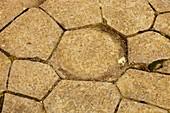 Basalt pavement,Iceland