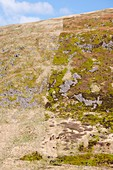 Affect of grazing on moorland vegetation