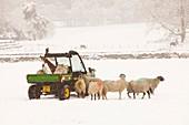 Farmer feeding sheep in winter