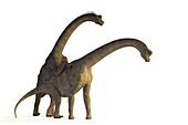 Apatosaurus dinosaurs mating