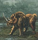 Woolly rhinoceros,illustration