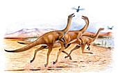 Gallimimus dinosaurs,illustration