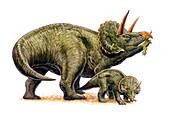 Nedoceratops dinosaurs,illustration
