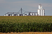 Grain elevator and maize field
