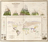 Global botanical geography,1840s