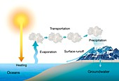 Water cycle,illustration
