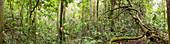 Interior of tropical rainforest,Ecuador