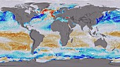 Ocean surface CO2 and winds,global map