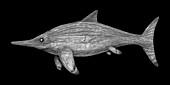 Acamptonectes marine dinosaur